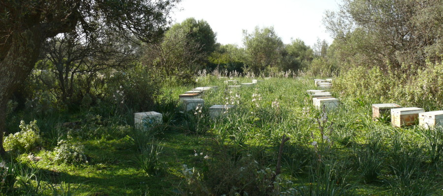 On Silver leafs apiary spring begins and so does beekeeping