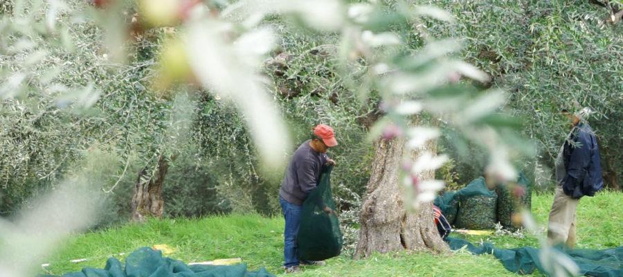 Was bedeutet ökologische Landwirtschaft?