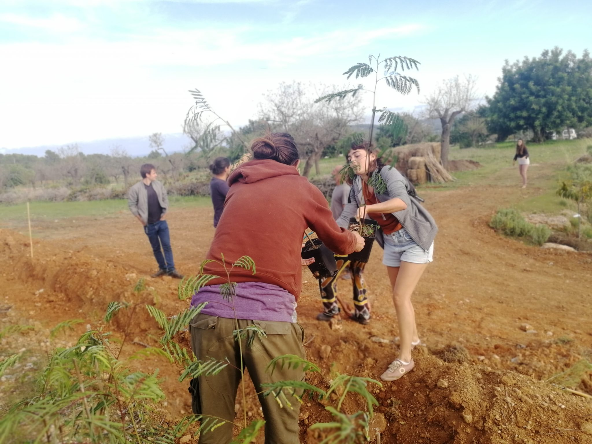 Tree planting Ibiza