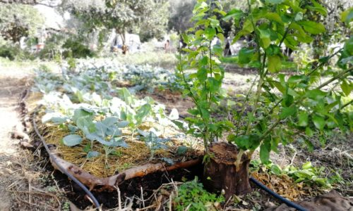 Vegetable garden in the food forest