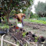 Nos visiteurs en pleine plantation lors de notre workshop consacré à la forêt comestible